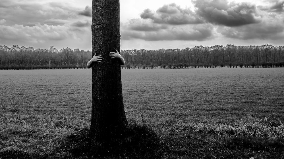 DSC_7688 Tree