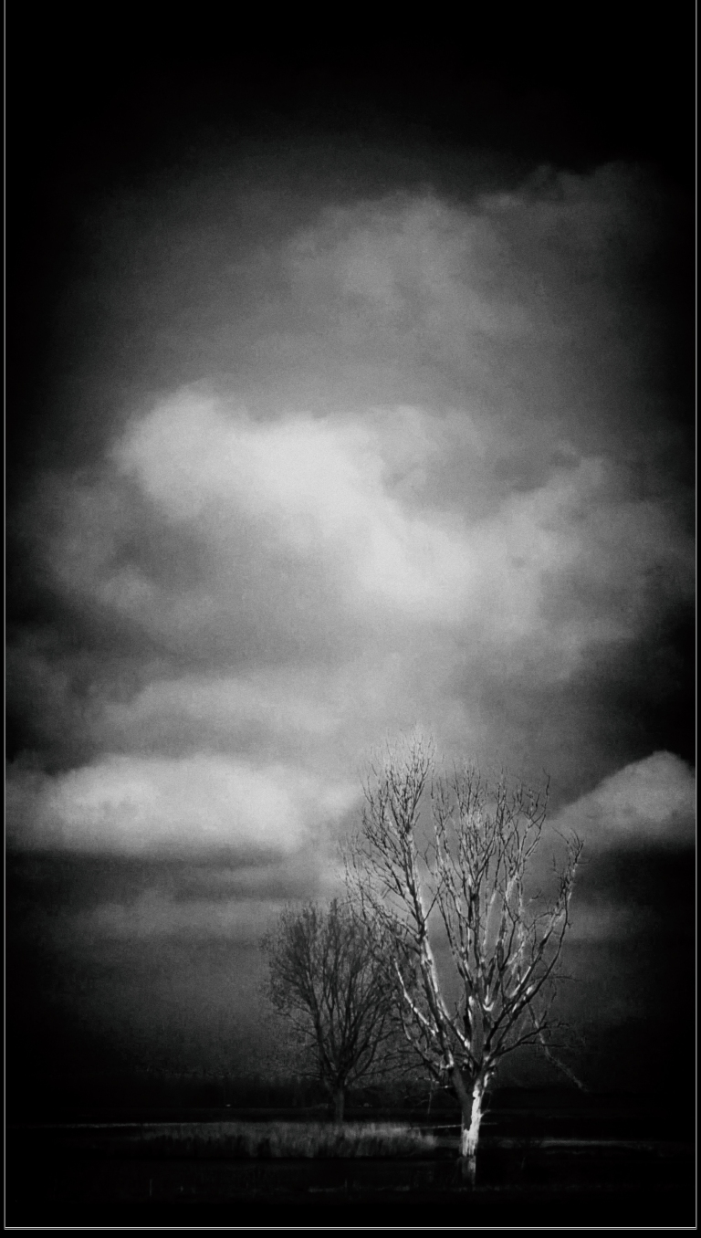 p1020084-tree